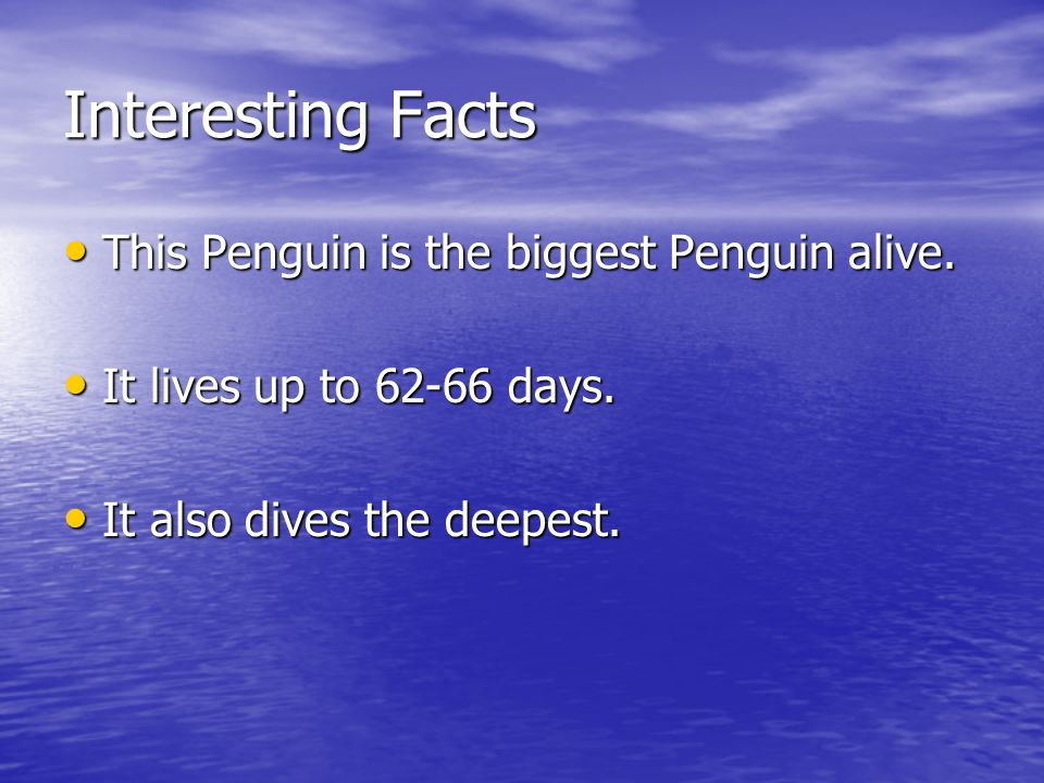 Interesting Facts This Penguin is the biggest Penguin alive.
