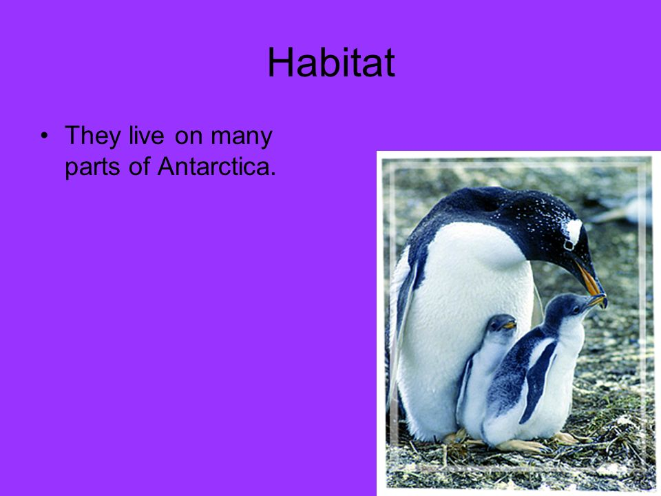 Habitat They live on many parts of Antarctica.