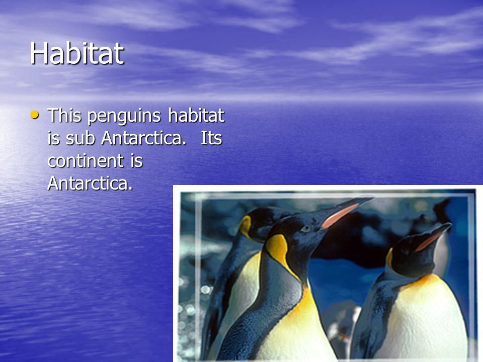 Habitat This penguins habitat is sub Antarctica. Its continent is Antarctica.