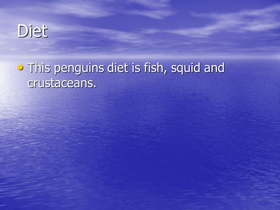 Diet This penguins diet is fish, squid and crustaceans.