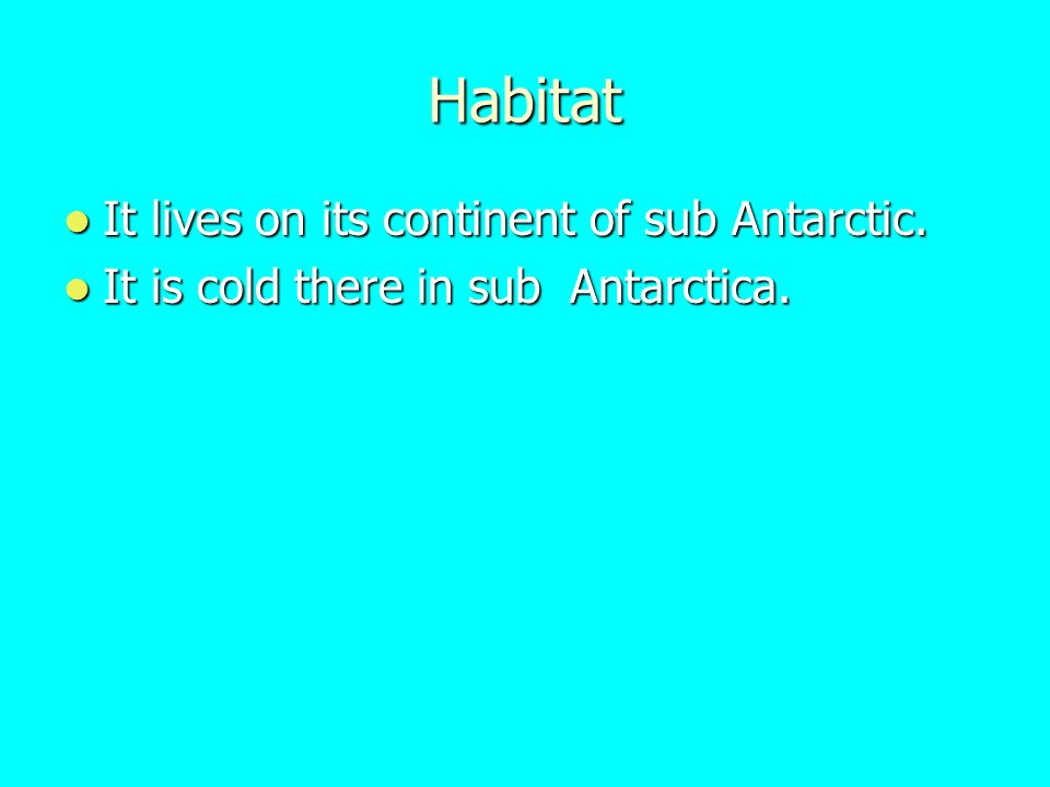 Habitat It lives on its continent of sub Antarctic.