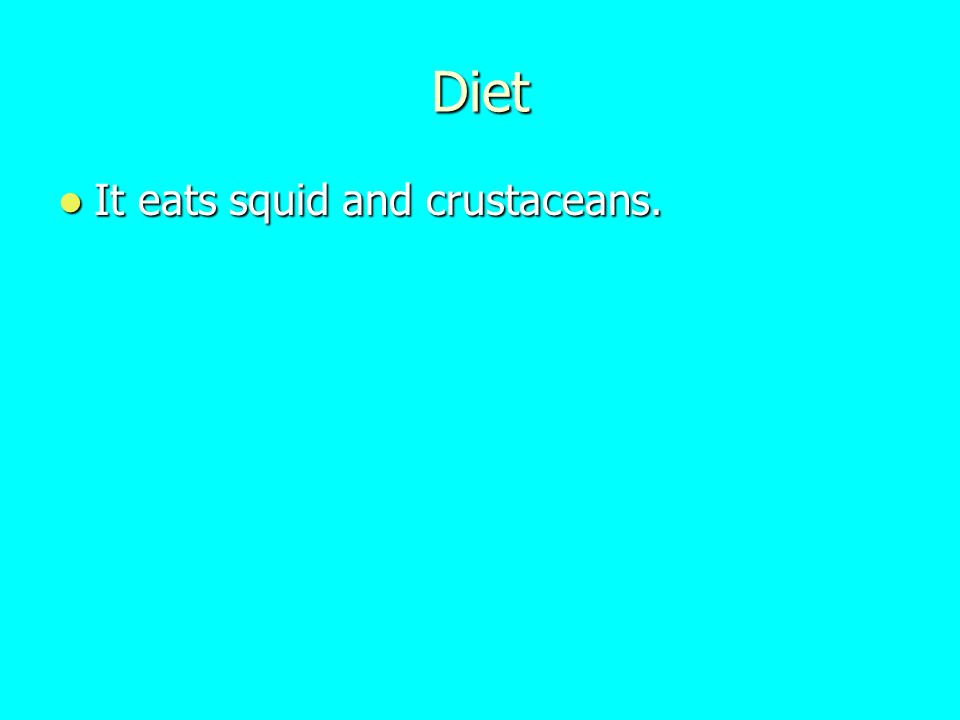 Diet It eats squid and crustaceans.