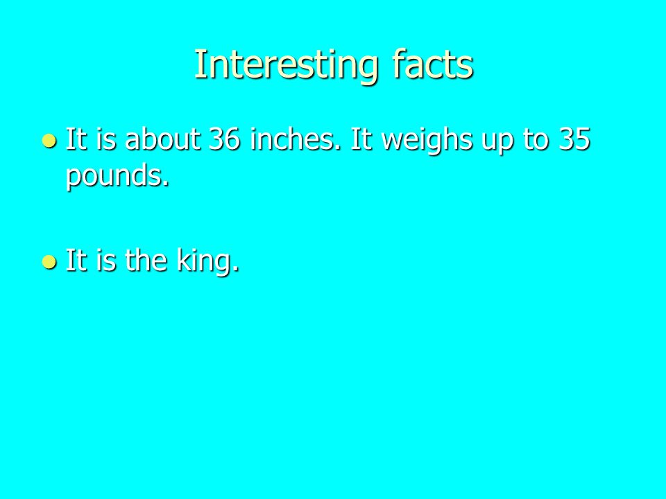 Interesting facts It is about 36 inches. It weighs up to 35 pounds.