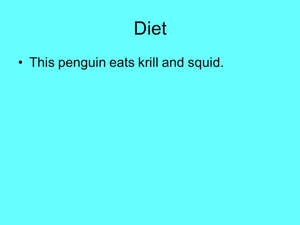 Diet This penguin eats krill and squid.