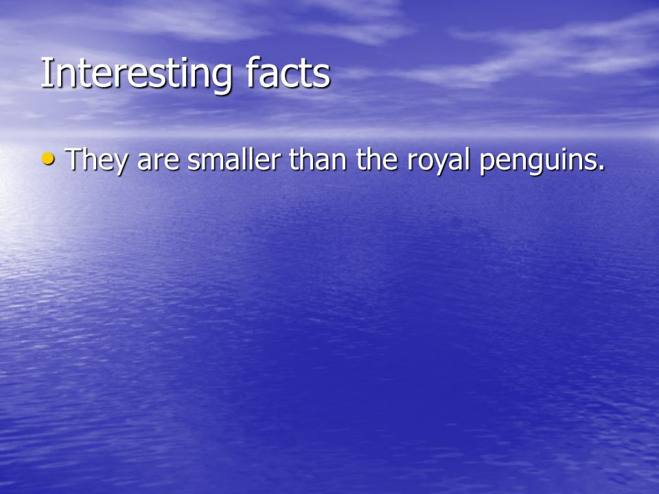 Interesting facts They are smaller than the royal penguins.