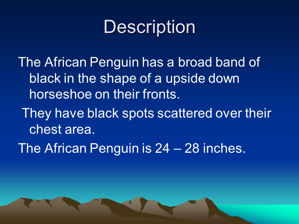 Description The African Penguin has a broad band of black in the shape of a upside down horseshoe on their fronts.
