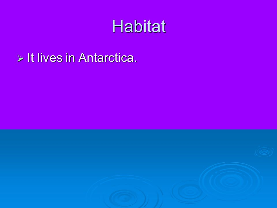 Habitat It lives in Antarctica.