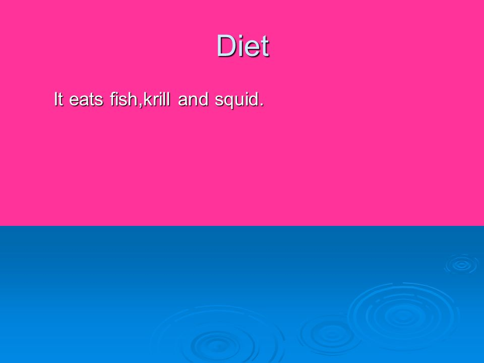 Diet It eats fish,krill and squid.