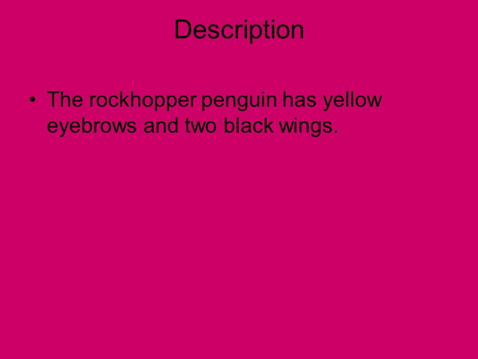 Description The rockhopper penguin has yellow eyebrows and two black wings.