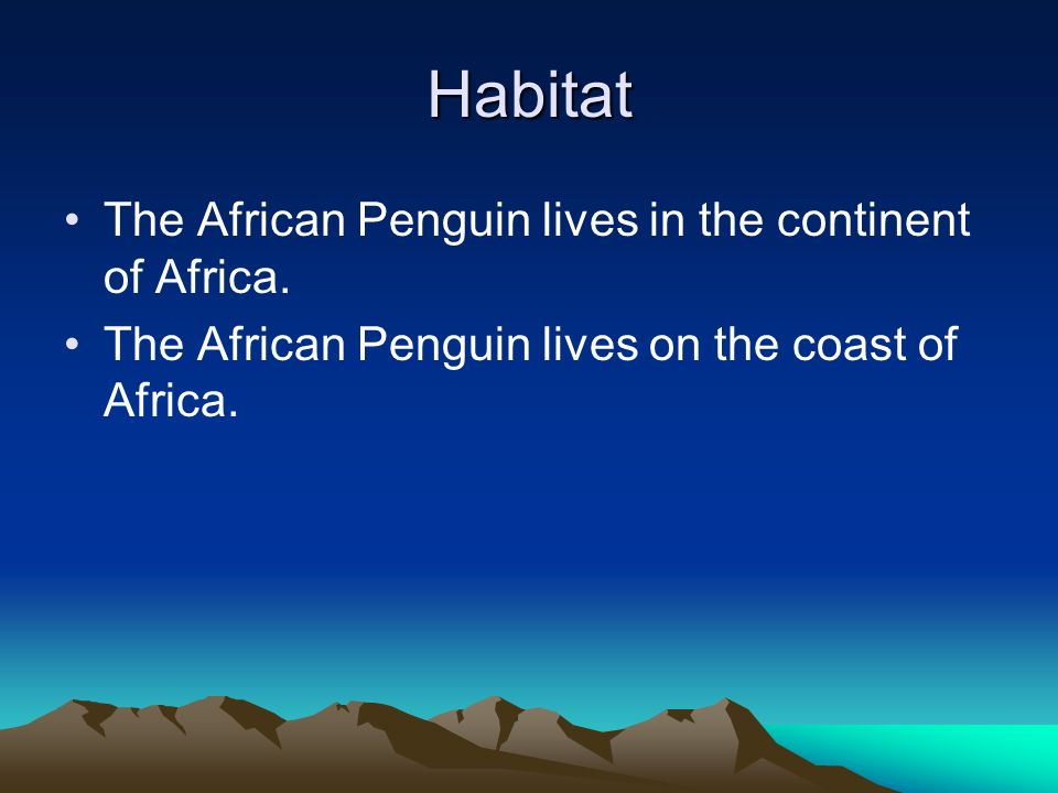 Habitat The African Penguin lives in the continent of Africa.