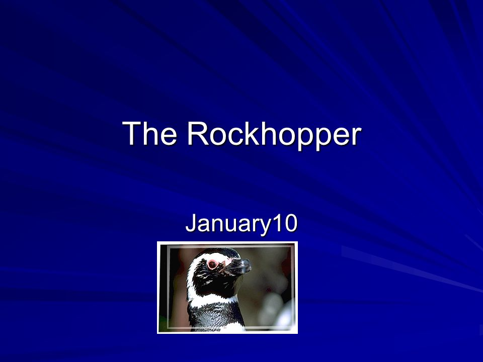 The Rockhopper January10