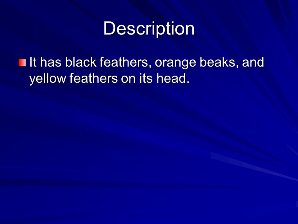 Description It has black feathers, orange beaks, and yellow feathers on its head.