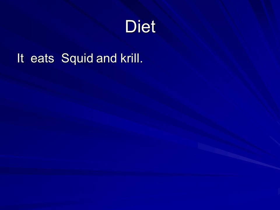 Diet It eats Squid and krill.
