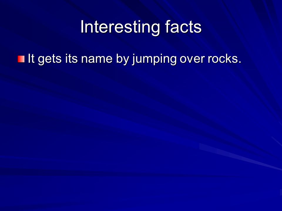 Interesting facts It gets its name by jumping over rocks.