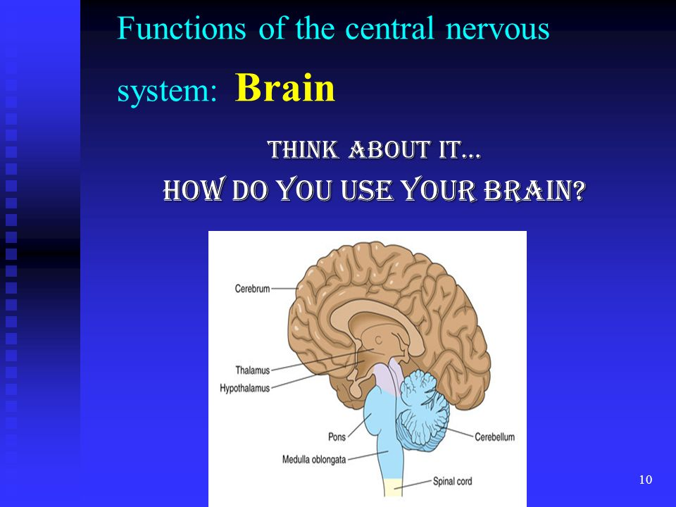 Functions of the central nervous system: Brain