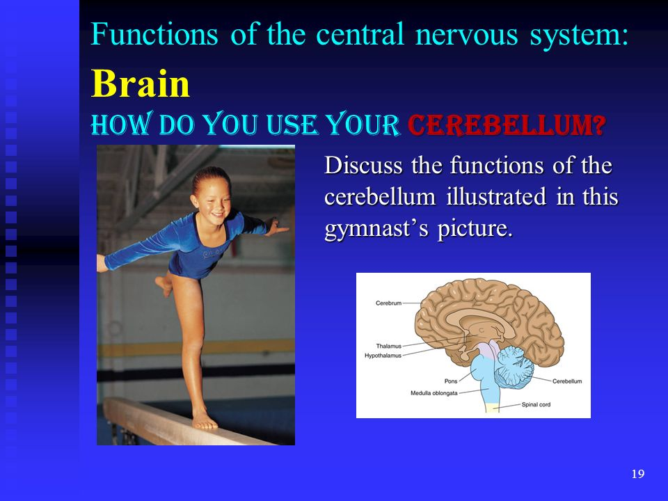Functions of the central nervous system: Brain How do you use your cerebellum