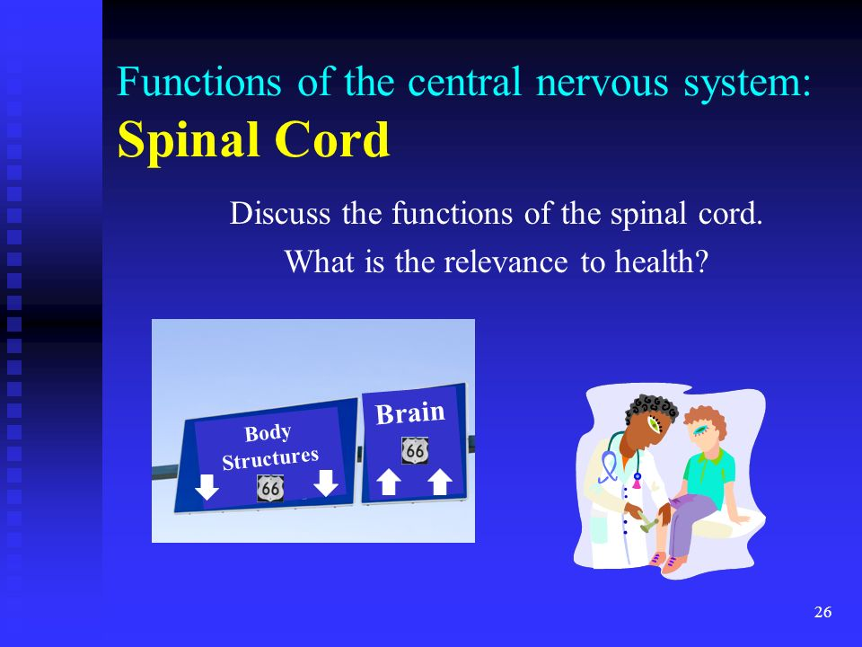 Functions of the central nervous system: Spinal Cord