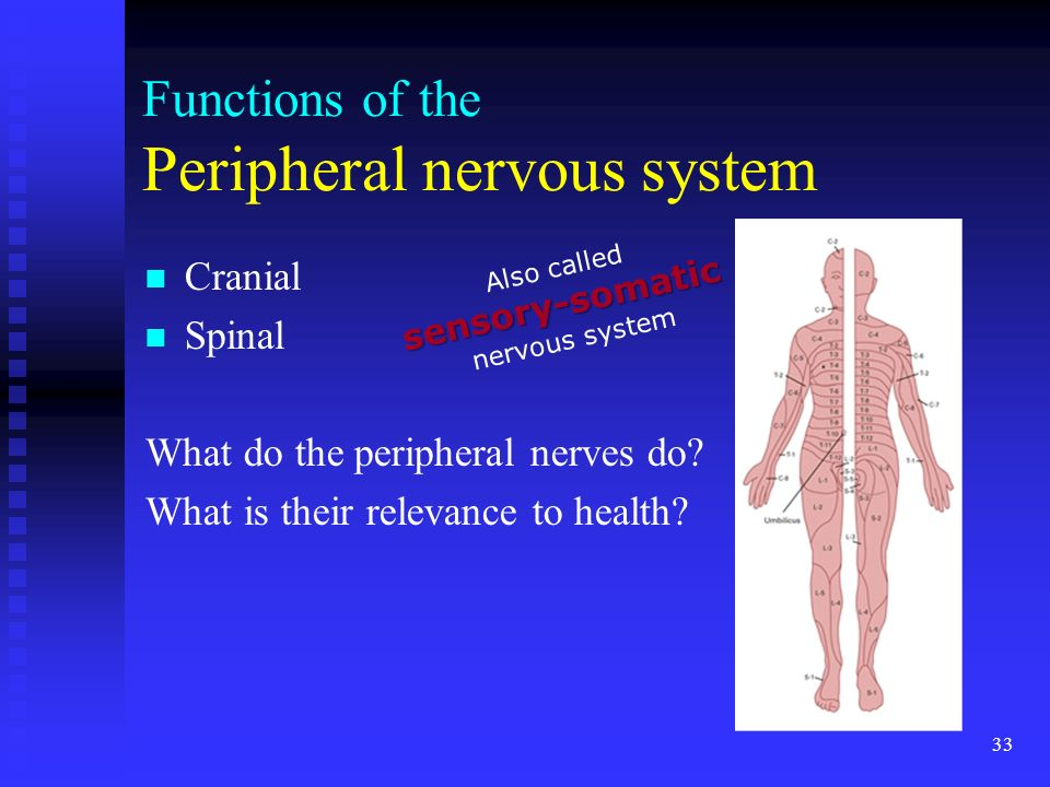 3. 01 Remember the structures of the nervous system 3 ... | 960 x 720 jpeg 66kB