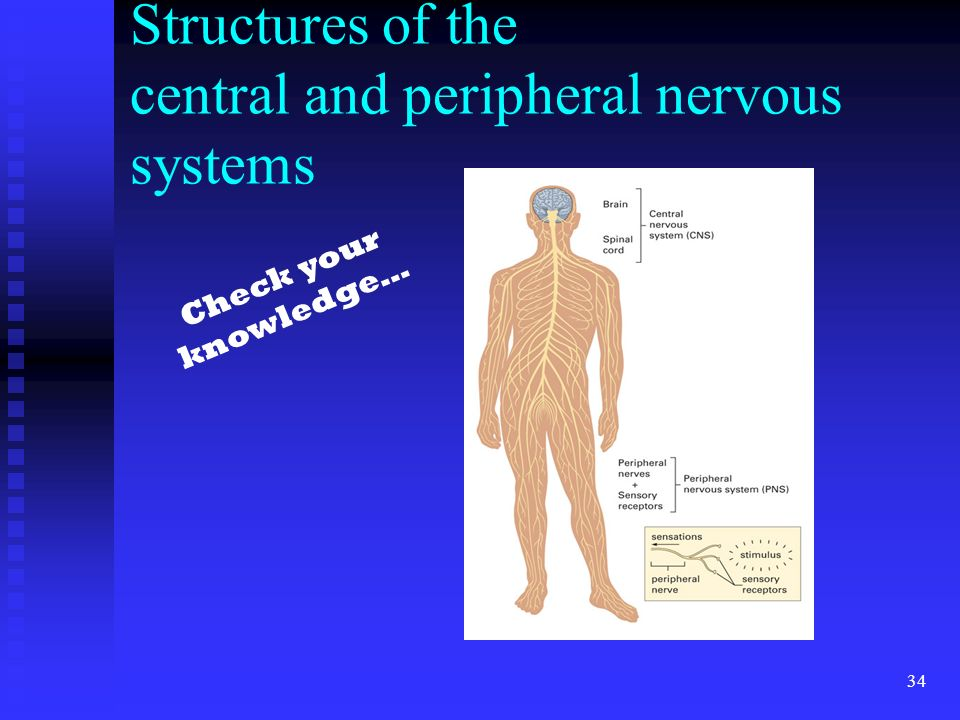 Structures of the central and peripheral nervous systems