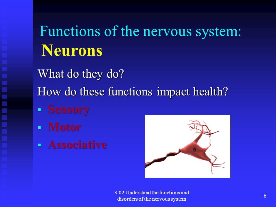Functions of the nervous system: Neurons