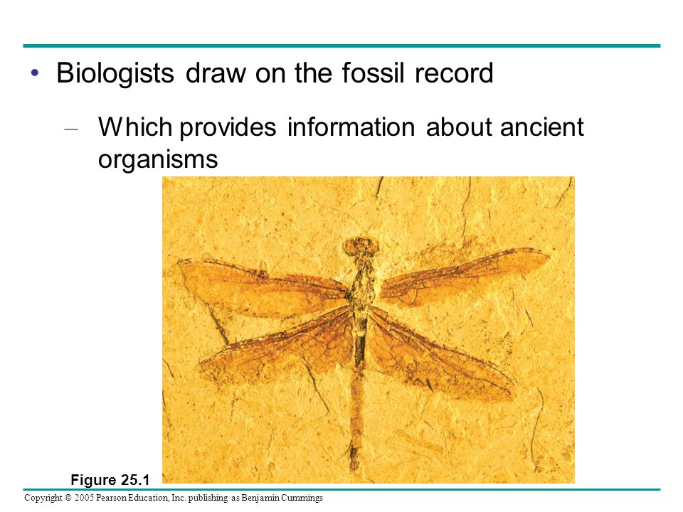 Biologists draw on the fossil record