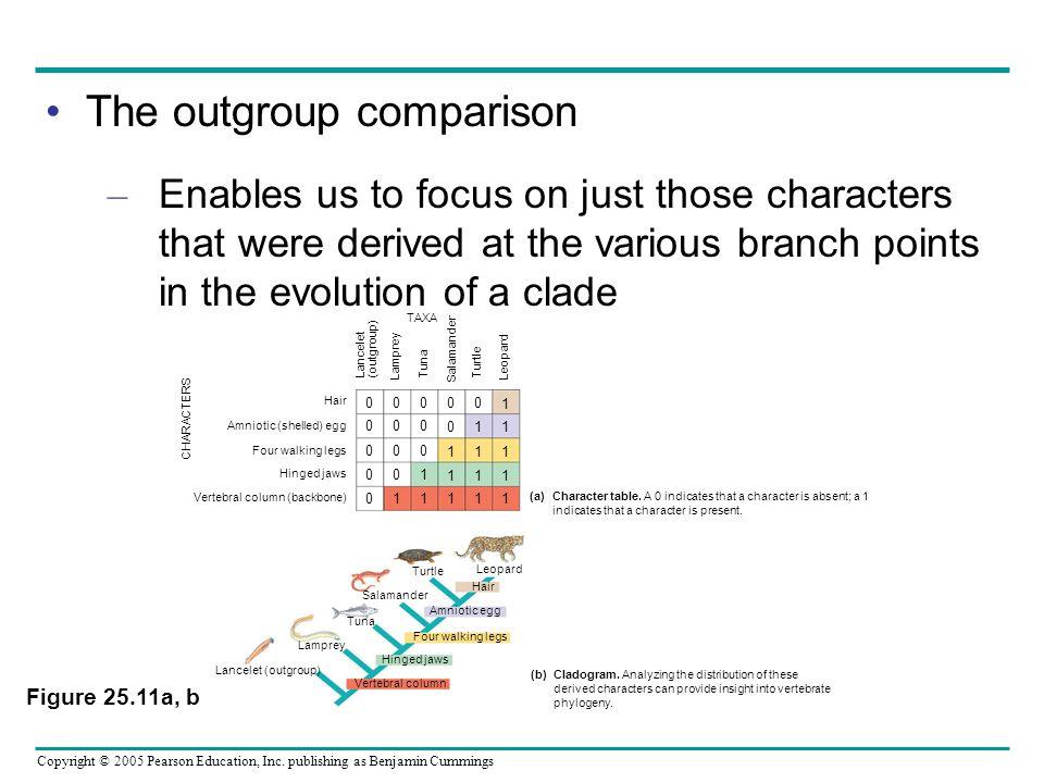 The outgroup comparison