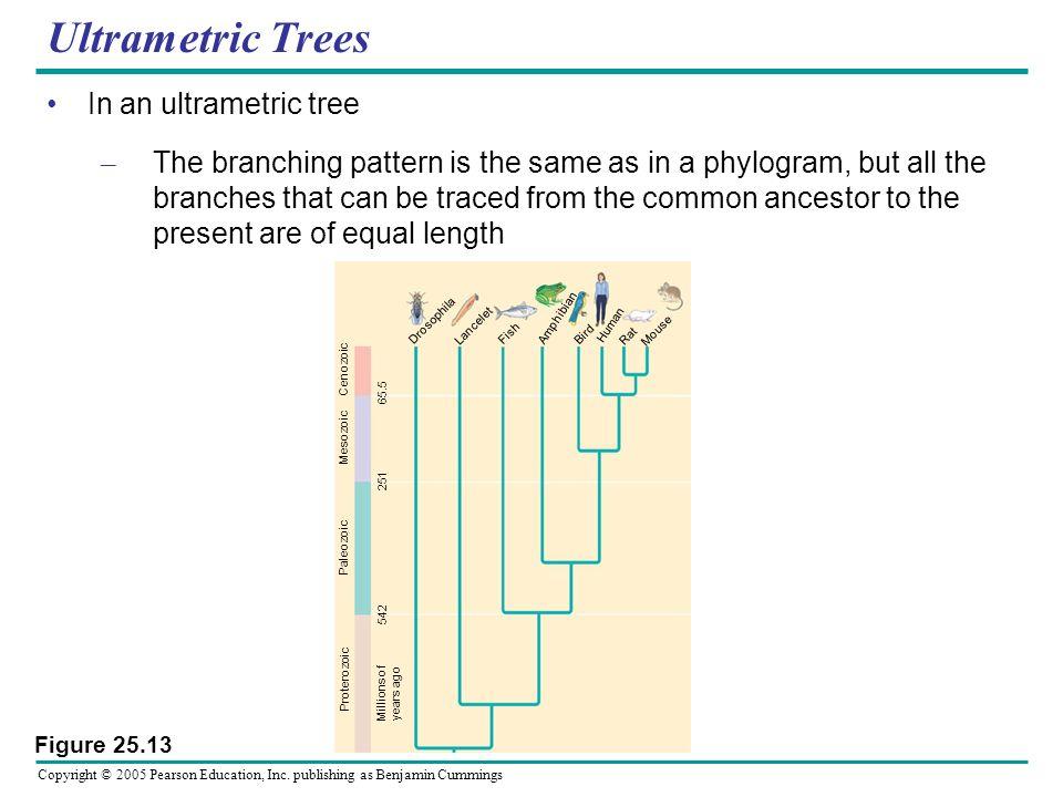 Ultrametric Trees In an ultrametric tree