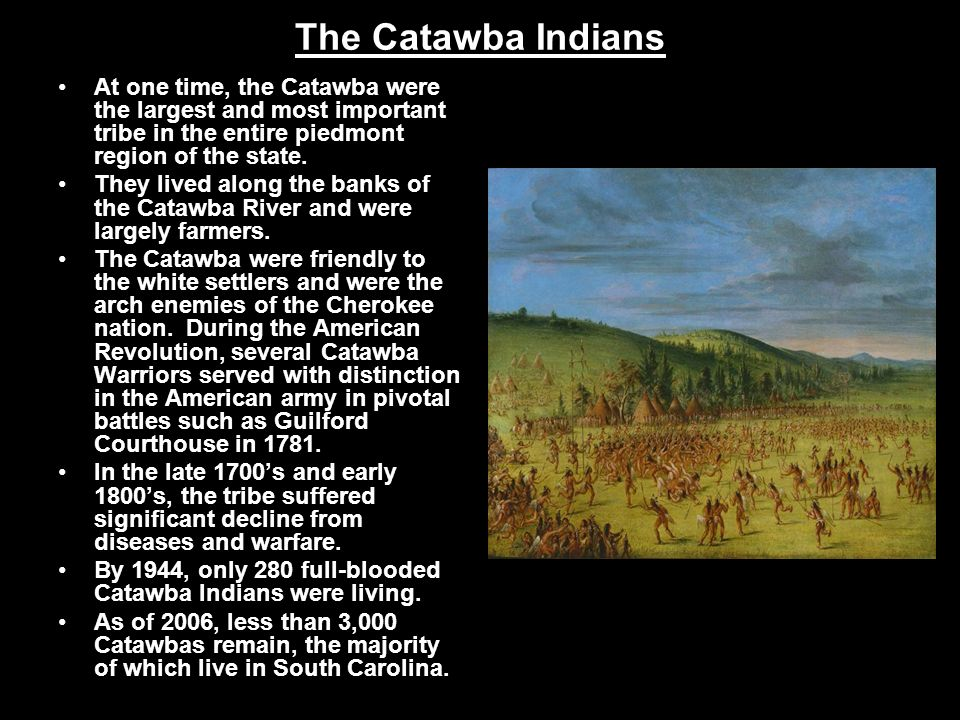 The Catawba Indians At one time, the Catawba were the largest and most important tribe in the entire piedmont region of the state.