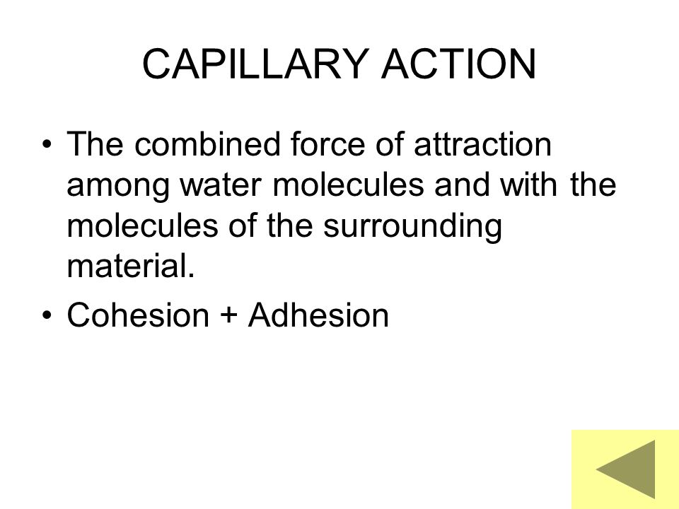 CAPILLARY ACTION The combined force of attraction among water molecules and with the molecules of the surrounding material.
