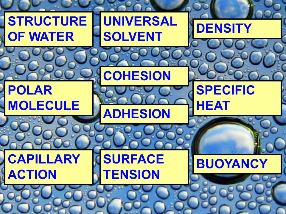 STRUCTURE OF WATER UNIVERSAL SOLVENT. DENSITY. COHESION. POLAR MOLECULE. SPECIFIC HEAT. ADHESION.