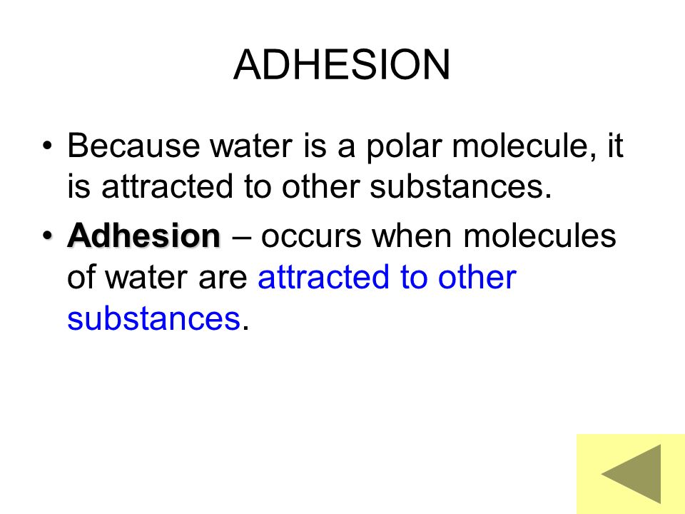 ADHESION Because water is a polar molecule, it is attracted to other substances.