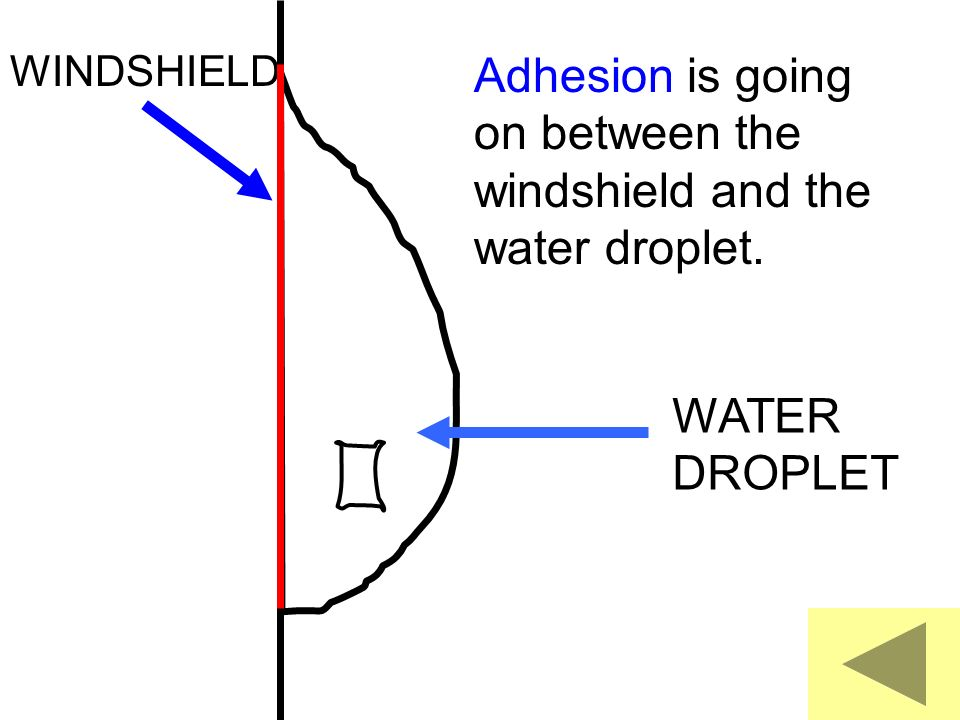 Adhesion is going on between the windshield and the water droplet.