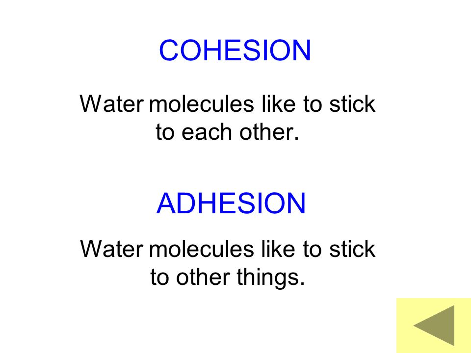 Water molecules like to stick to each other.