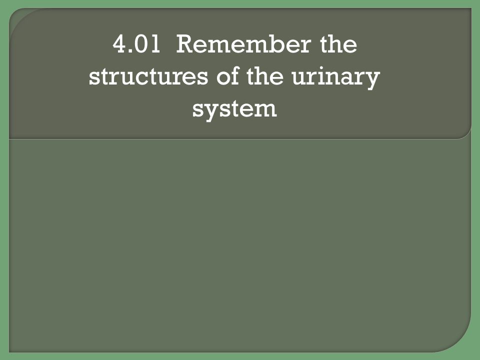 4.01 Remember the structures of the urinary system