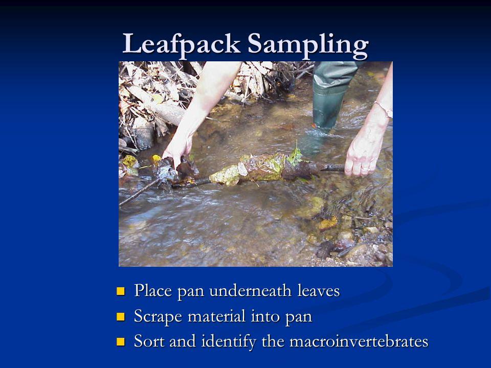 Leafpack Sampling Place pan underneath leaves Scrape material into pan