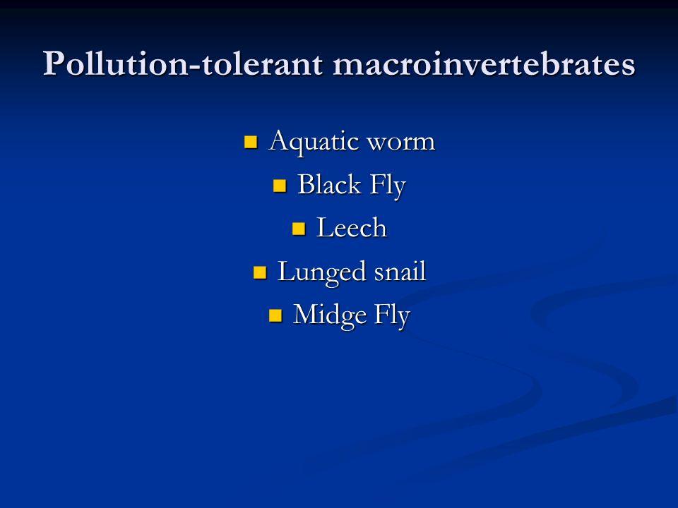 Pollution-tolerant macroinvertebrates