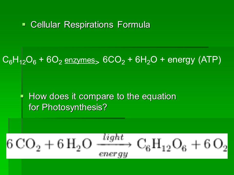 Cellular Respirations Formula