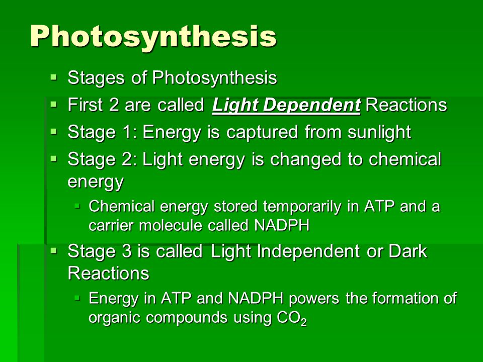 Photosynthesis Stages of Photosynthesis