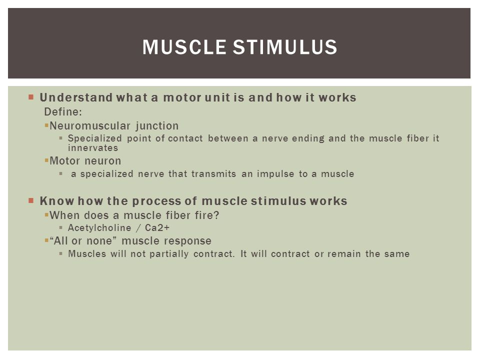 Muscle stimulus Understand what a motor unit is and how it works
