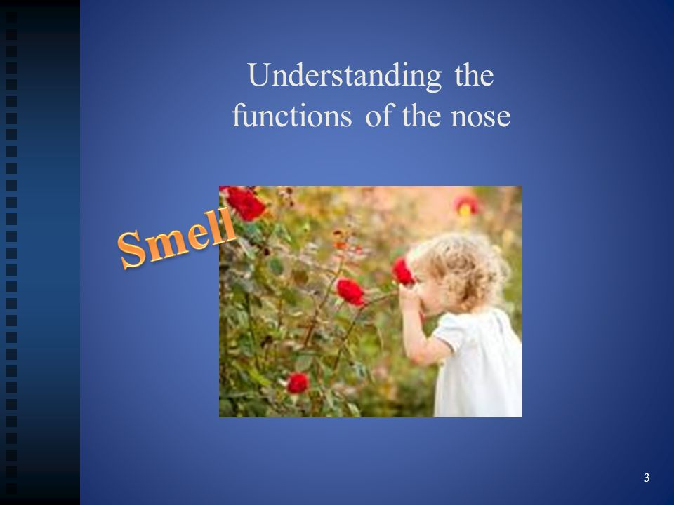 Understanding the functions of the nose