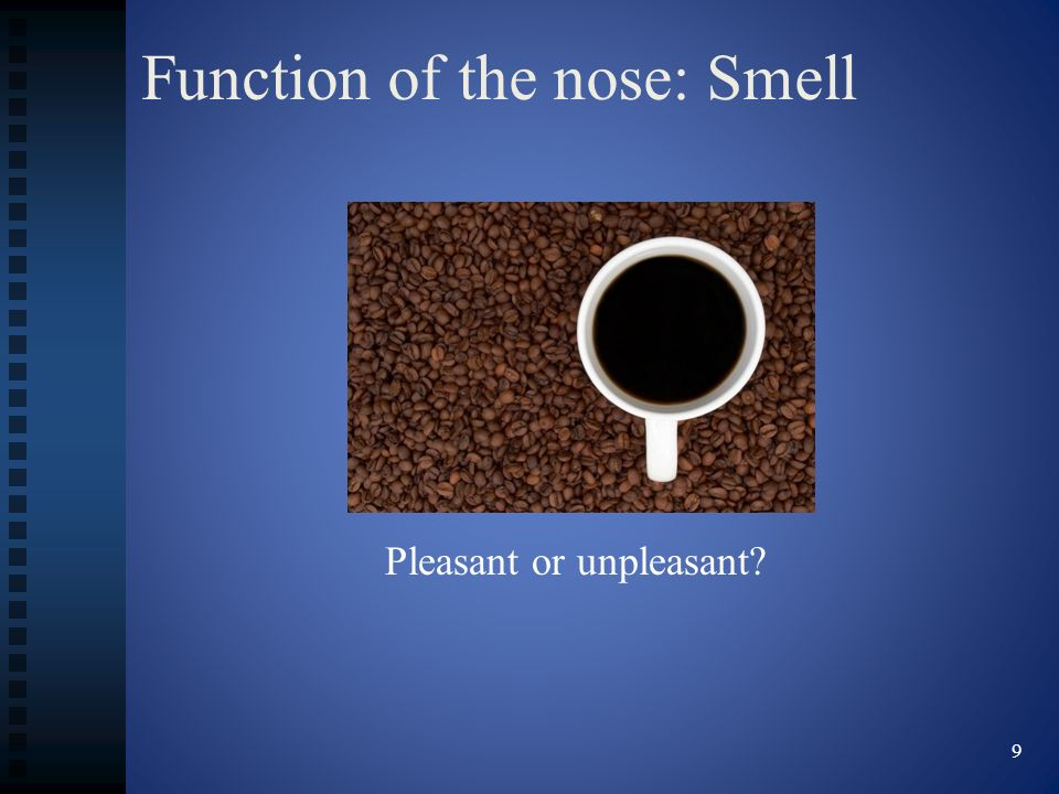 Function of the nose: Smell