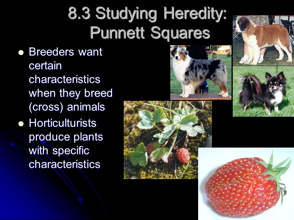 8.3 Studying Heredity: Punnett Squares