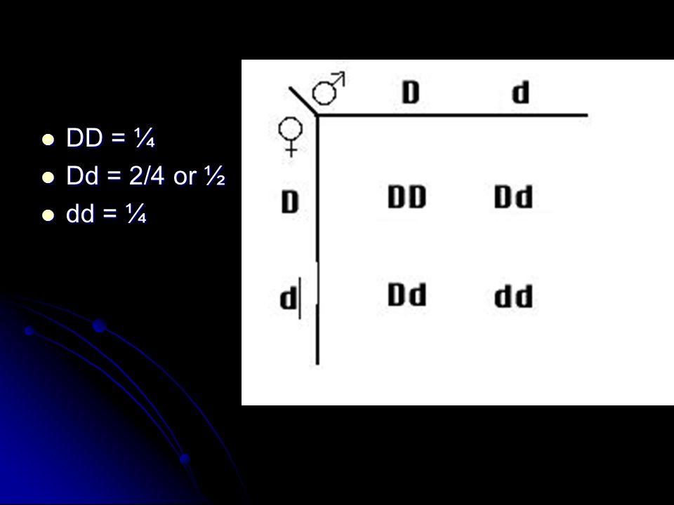 DD = ¼ Dd = 2/4 or ½ dd = ¼