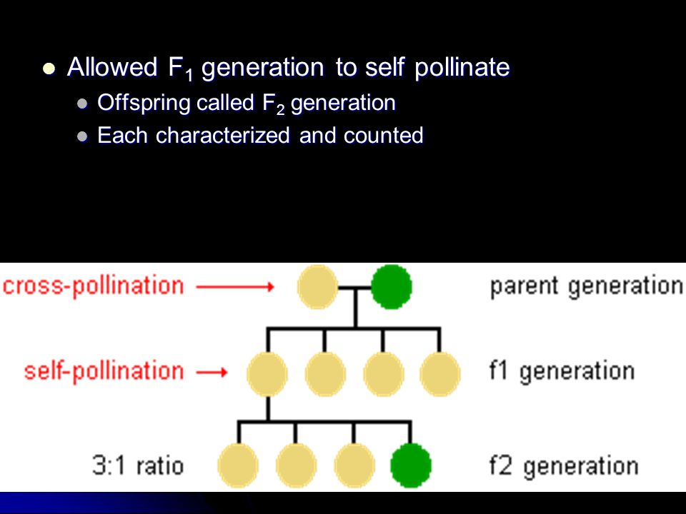 Allowed F1 generation to self pollinate