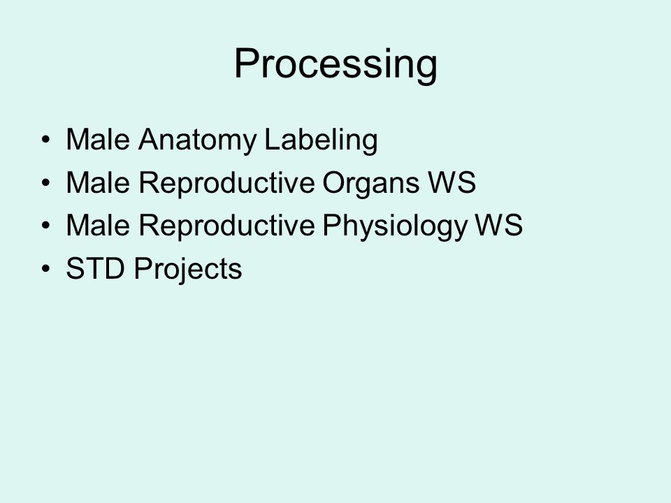 Processing Male Anatomy Labeling Male Reproductive Organs WS