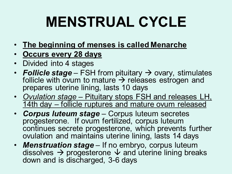 MENSTRUAL CYCLE The beginning of menses is called Menarche
