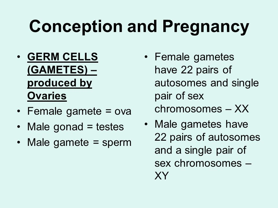 Conception and Pregnancy