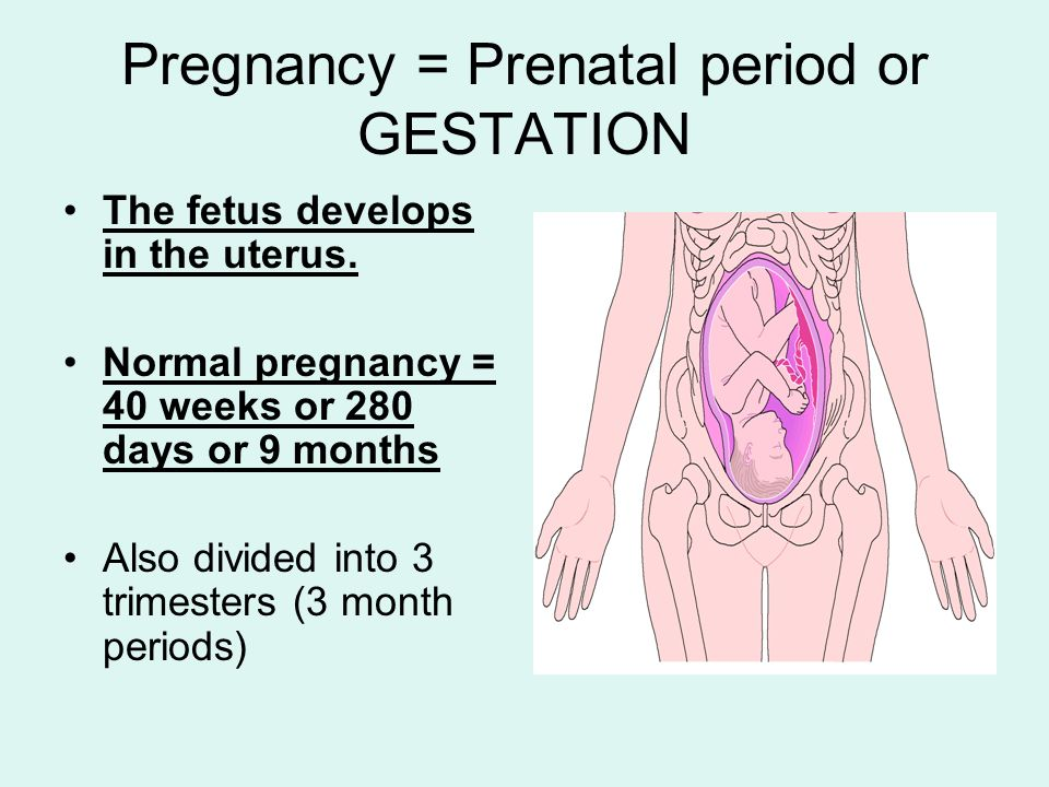 Pregnancy = Prenatal period or GESTATION
