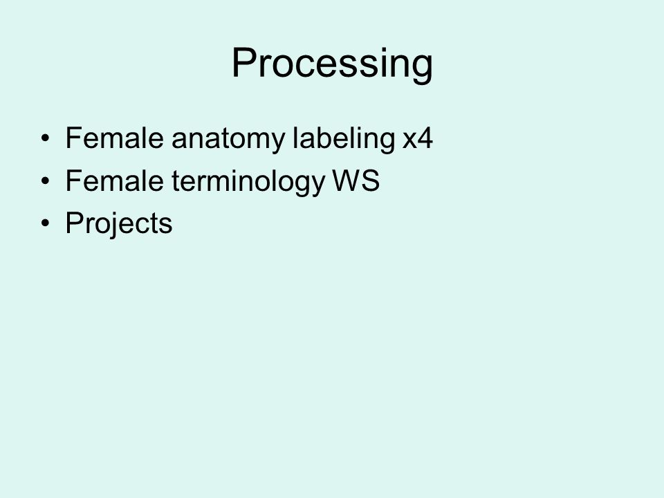 Processing Female anatomy labeling x4 Female terminology WS Projects