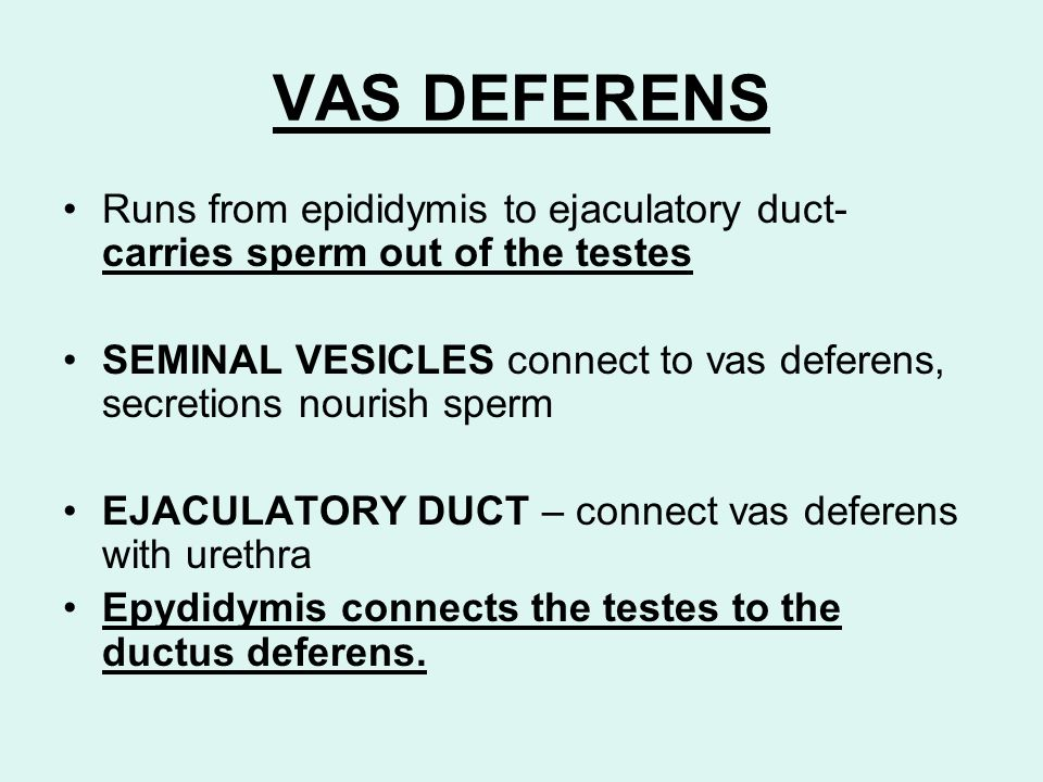 VAS DEFERENSRuns from epididymis to ejaculatory duct- carries sperm out of the testes.
